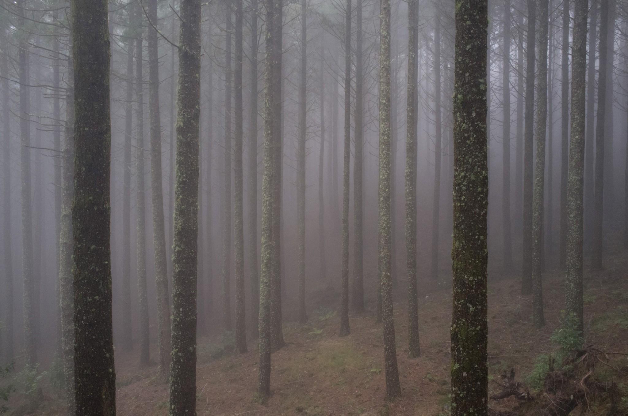 fog | © Fabrice Villard