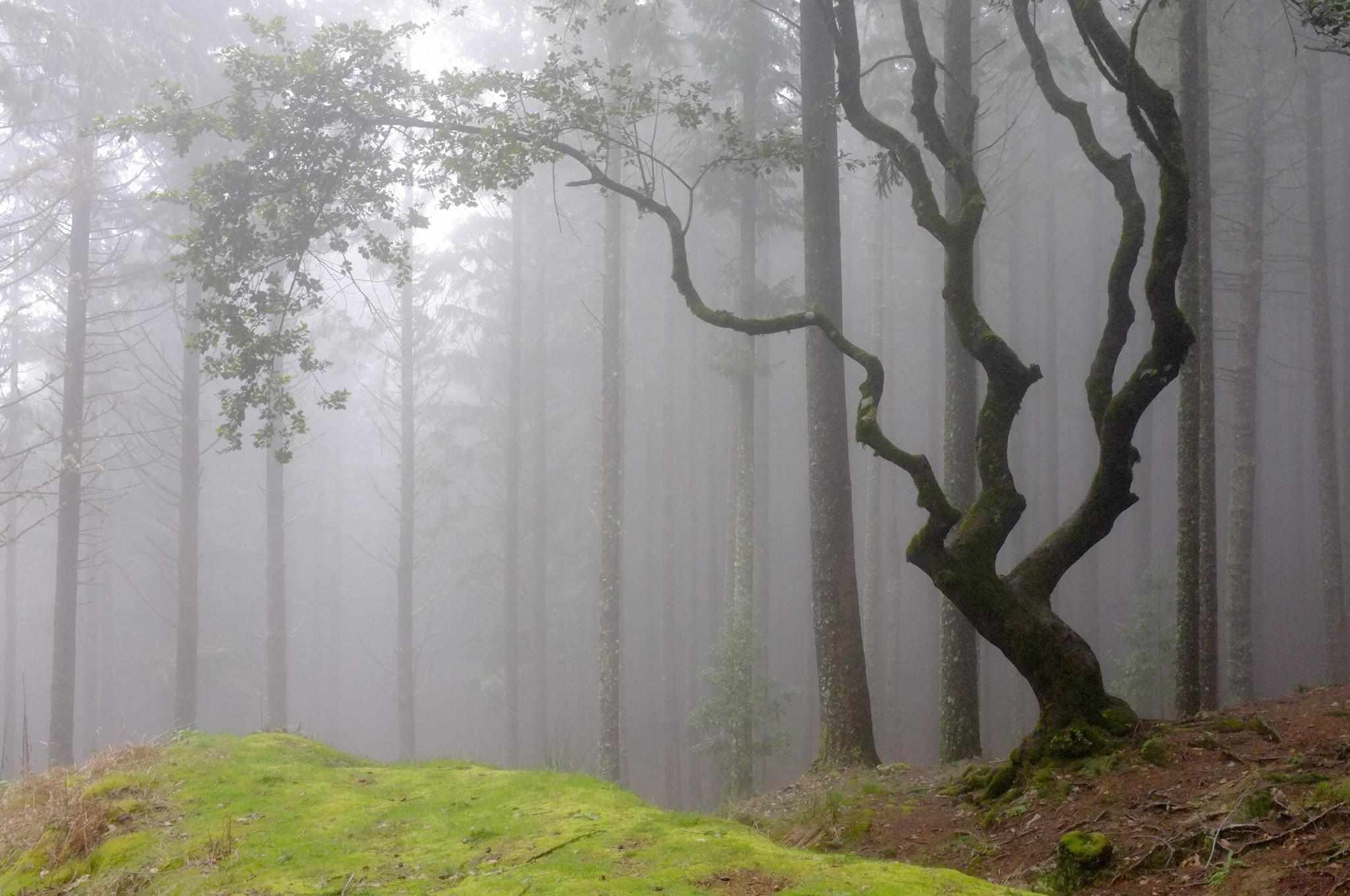 fog |© Fabrice Villard